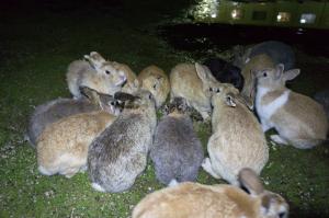 夜のウサギ談義