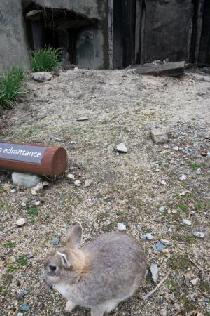 戦争遺跡とウサギ