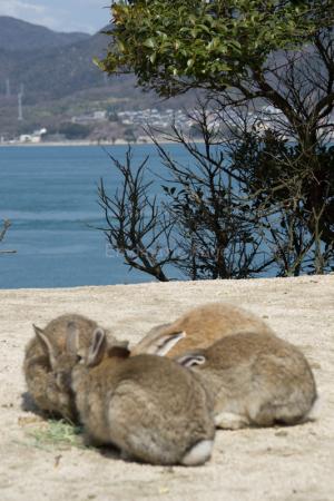 ウサギと瀬戸内海